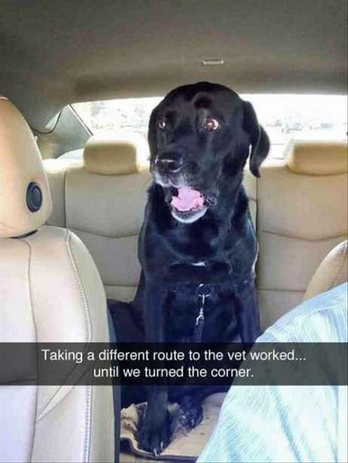 Funny Animal Pictures Of The Day Release 7 (100 Photos)-53