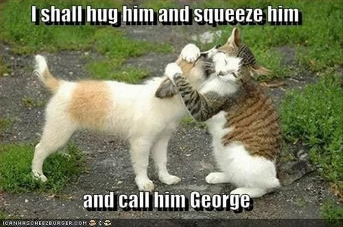 Funny Animal Pictures Of The Day Release 7 (100 Photos)-56