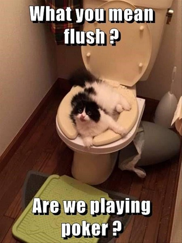 Funny Animal Pictures Of The Day Release 7 (100 Photos)-67