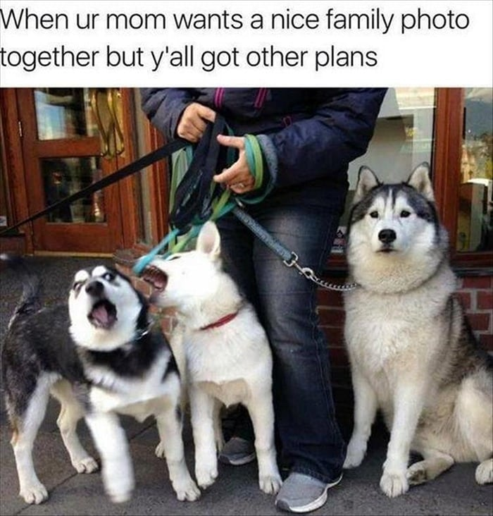 Funny Animal Pictures Of The Day Release 7 (100 Photos)-76