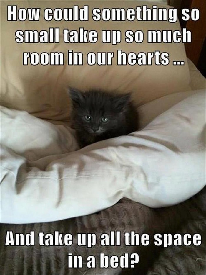 Funny Animal Pictures Of The Day Release 7 (100 Photos)-77