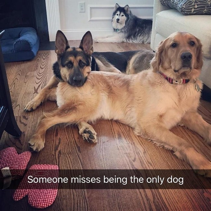 Funny Animal Pictures Of The Day Release 7 (100 Photos)-85