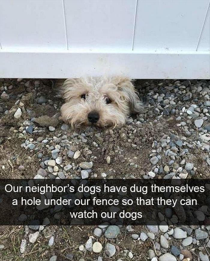 Funny Animal Pictures Of The Day Release 7 (100 Photos)-92