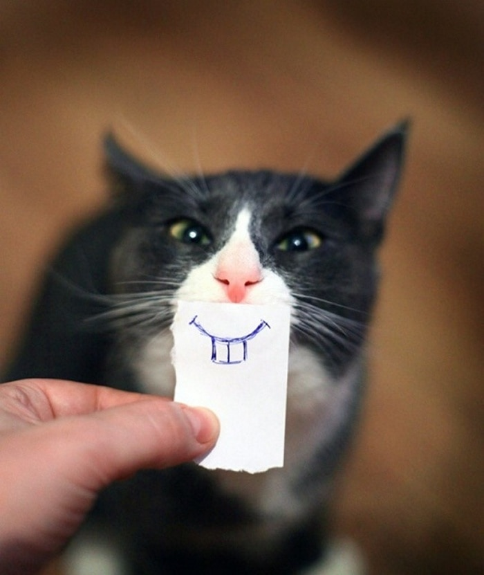 Cats With Cartoon Mouths And Eyes (19 Pics)-01