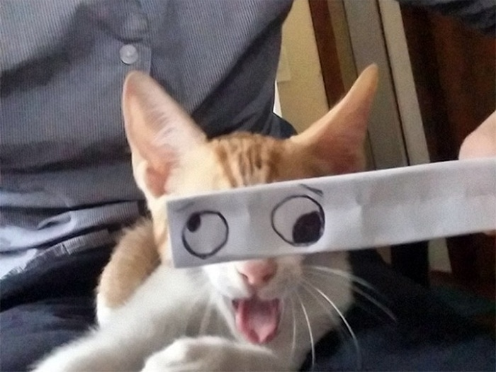 Cats With Cartoon Mouths And Eyes (19 Pics)-05