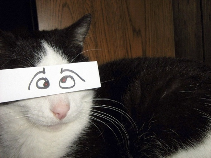 Cats With Cartoon Mouths And Eyes (19 Pics)-06