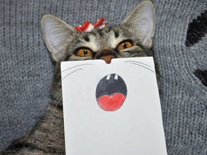 Cats With Cartoon Mouths And Eyes (19 Pics)-08