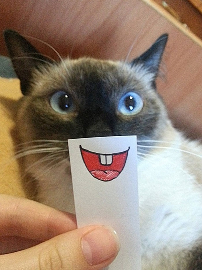 Cats With Cartoon Mouths And Eyes (19 Pics)-12