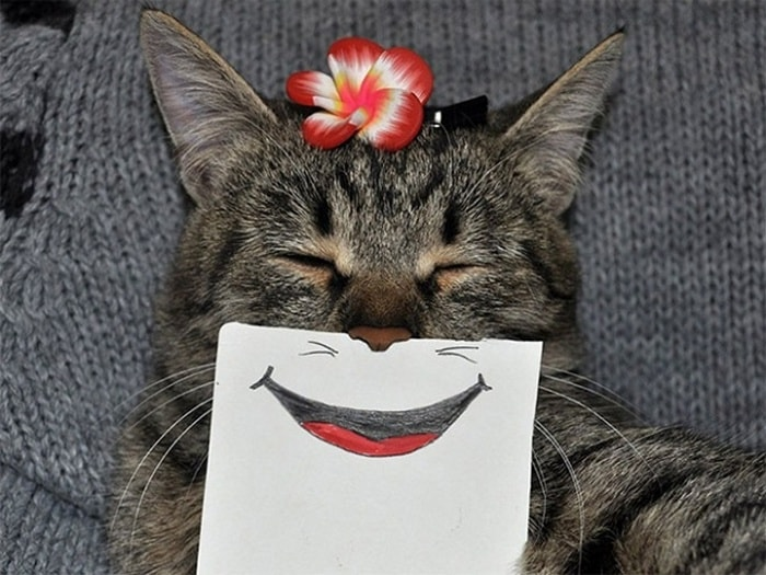 Cats With Cartoon Mouths And Eyes (19 Pics)-18