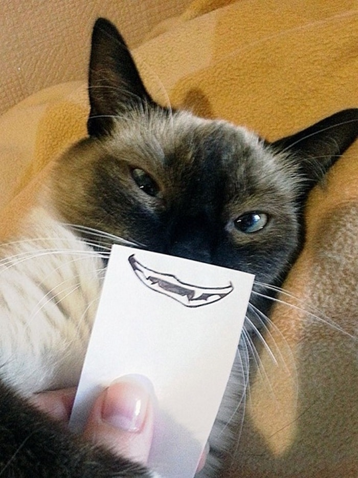 Cats With Cartoon Mouths And Eyes (19 Pics)-19