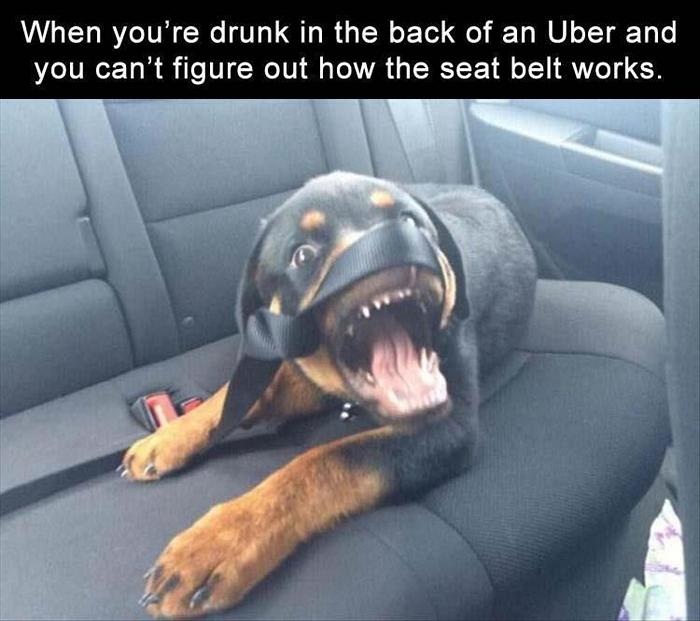 Daily Funny Memes And Pictures Release 8 (35 Pics)-15
