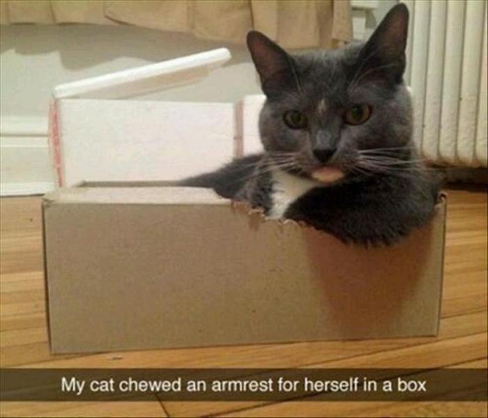 Funny Animal Pictures Of The Day Release 9 (37 Photos)-03