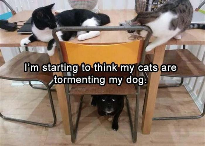 Funny Animal Pictures Of The Day Release 9 (37 Photos)-07