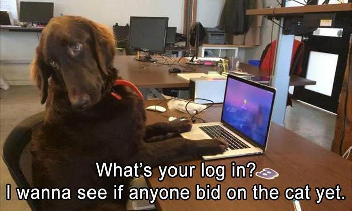 Funny Animal Pictures Of The Day Release 9 (37 Photos)-13
