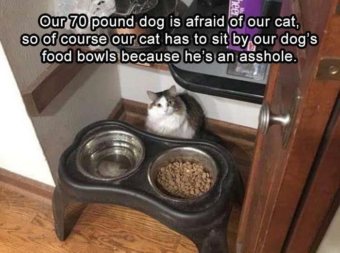 Funny Animal Pictures Of The Day Release 10 (36 Photos)-23
