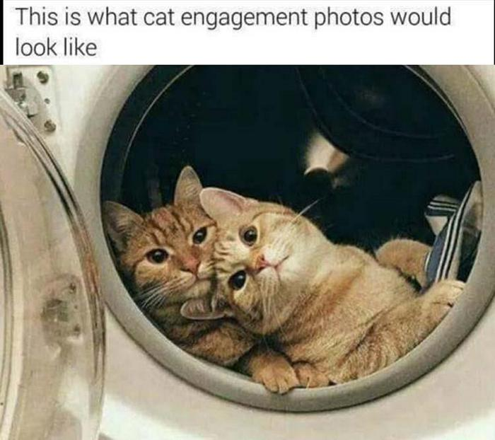 Funny Animal Pictures Of The Day Release 11 (44 Photos)-15
