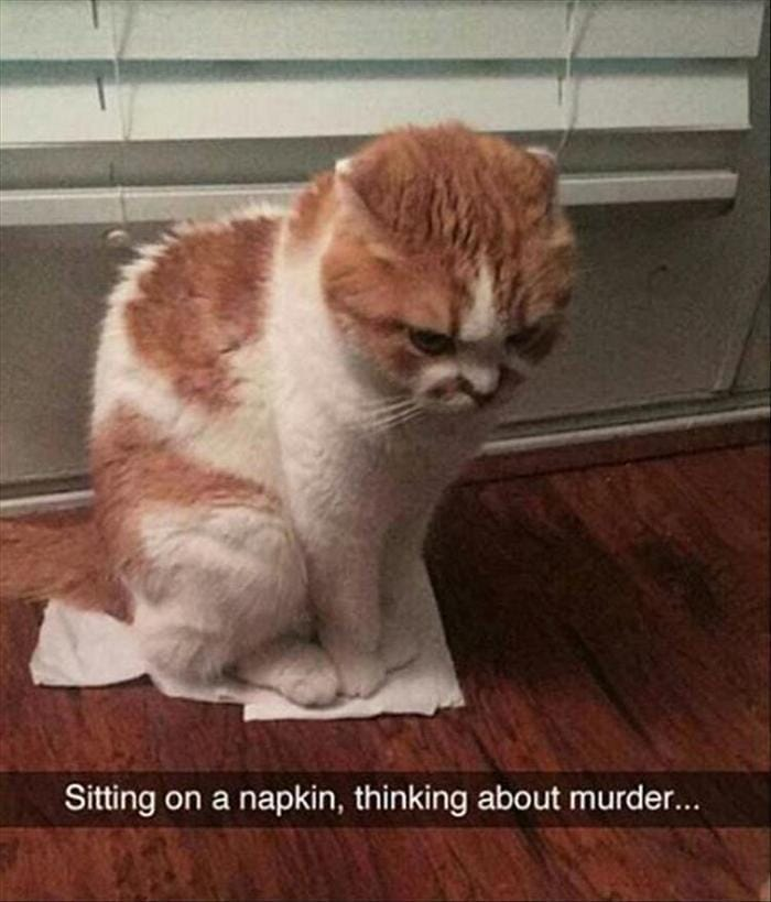 Funny Animal Pictures Of The Day Release 11 (44 Photos)-18