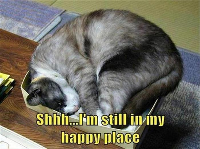 Funny Animal Pictures Of The Day Release 11 (44 Photos)-19