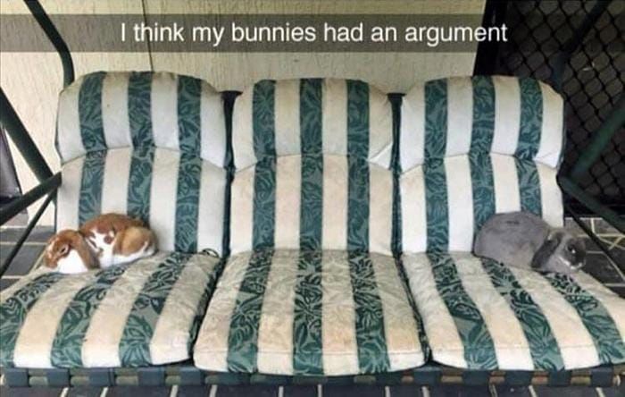 Funny Animal Pictures Of The Day Release 11 (44 Photos)-20