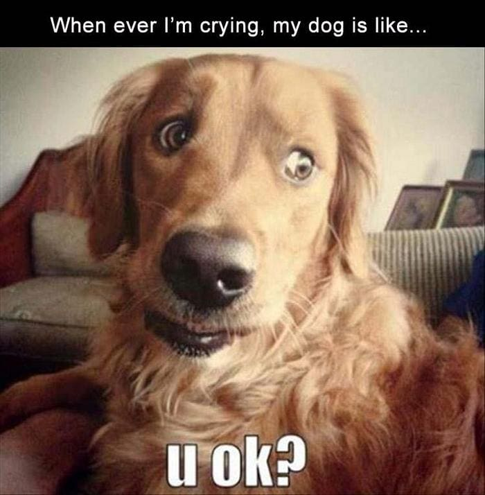 Funny Animal Pictures Of The Day Release 11 (44 Photos)-22