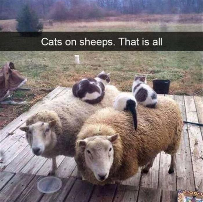 Funny Animal Pictures Of The Day Release 11 (44 Photos)-24