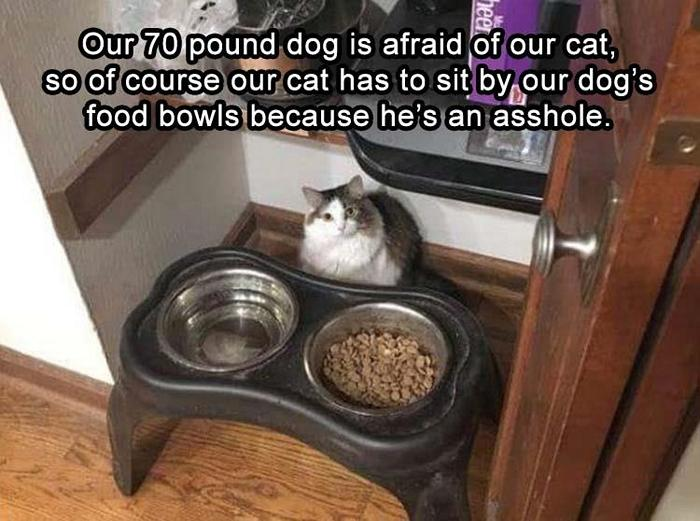 Funny Animal Pictures Of The Day Release 11 (44 Photos)-26
