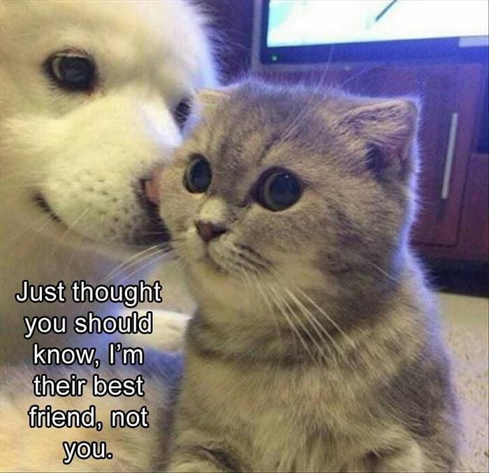 Funny Animal Pictures Of The Day Release 11 (44 Photos)-29