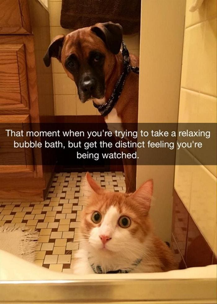 Funny Animal Pictures Of The Day Release 11 (44 Photos)-32