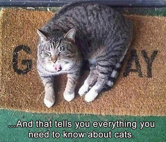 Funny Animal Pictures Of The Day Release 11 (44 Photos)-35