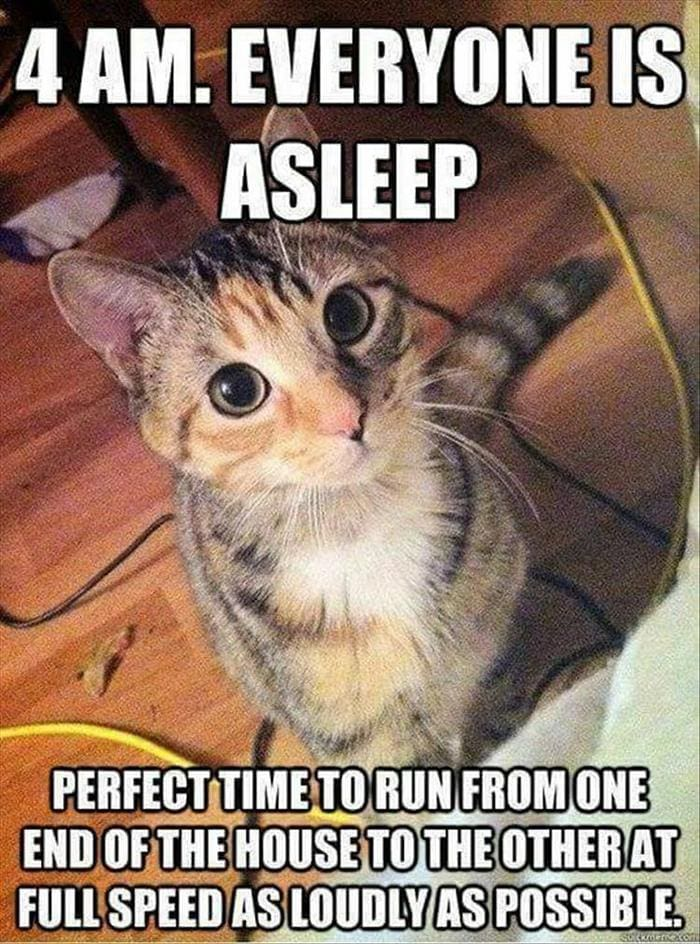 Funny Animal Pictures Of The Day Release 11 (44 Photos)-44