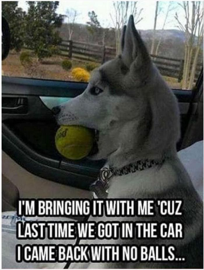 Funny Animal Pictures Of The Day Release 12 (45 Photos)-39