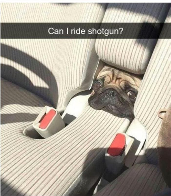 Funny Animal Pictures Of The Day Release 12 (45 Photos)-41