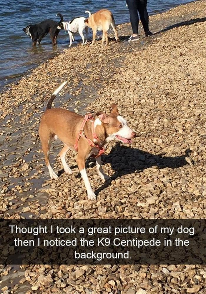 Funny Animal Pictures Of The Day Release 12 (45 Photos)-45