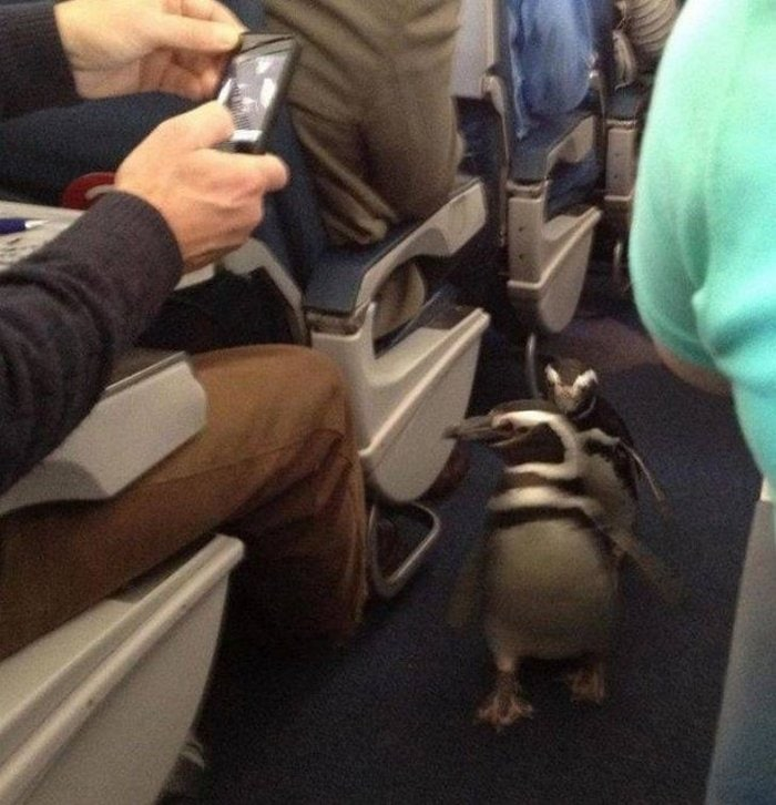 Awkward Airplane Moments That Are Funny And Scary (18 Photos)-14
