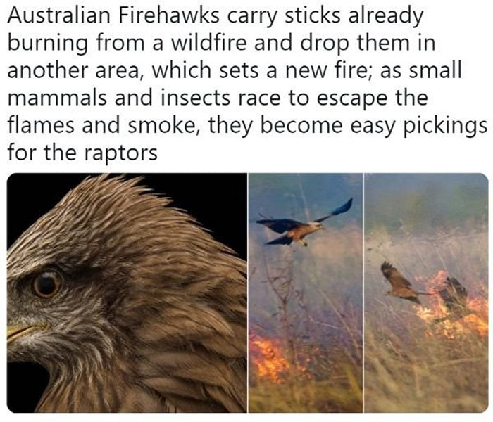 24 Best Meanwhile In Australia Photos-14