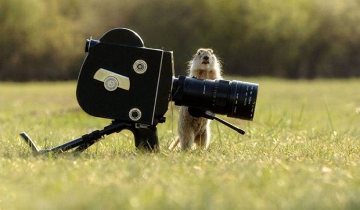 Funny Animal Pictures Of The Day Release 13 (54 Photos)-03