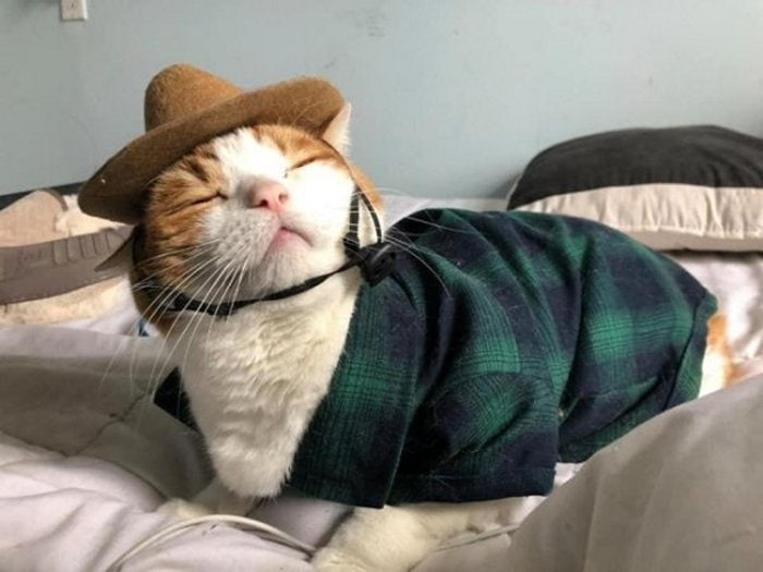 Cute And Funny Cats Of The Year 2019 (98 Photos)-08