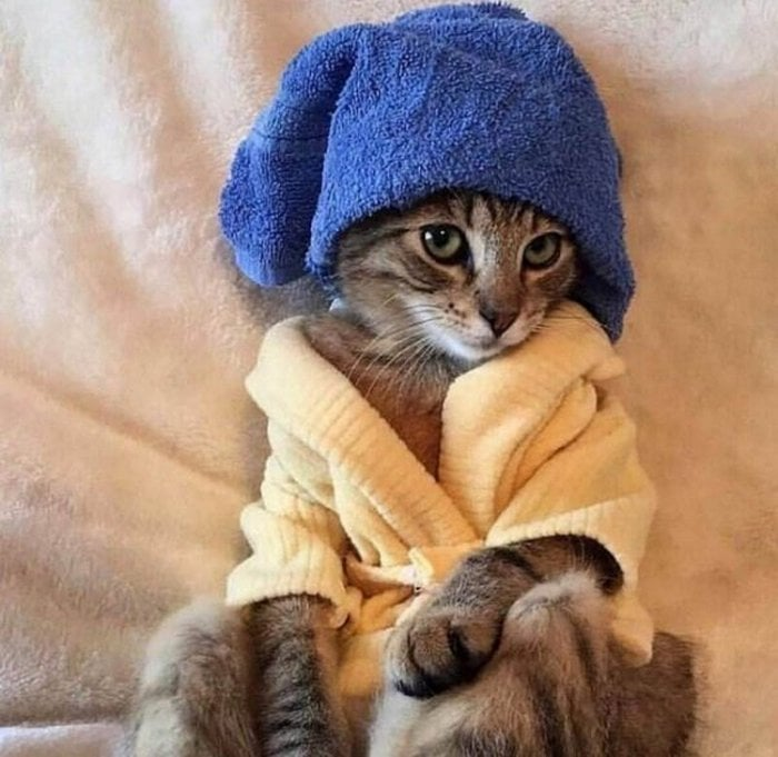 Cute And Funny Cats Of The Year 2019 (98 Photos)-53