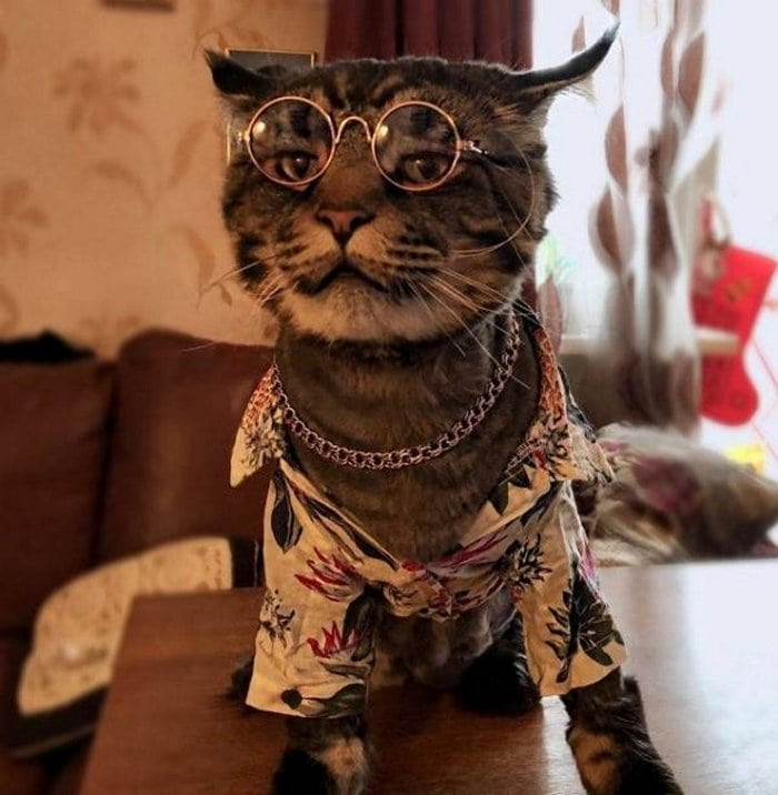 Cute And Funny Cats Of The Year 2019 (98 Photos)-55