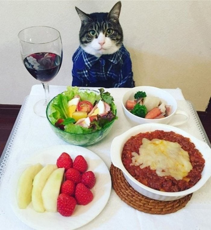 Cute And Funny Cats Of The Year 2019 (98 Photos)-61