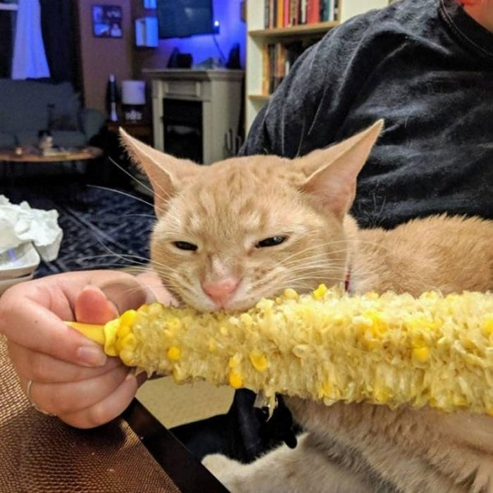 Cute And Funny Cats Of The Year 2019 (98 Photos)-68