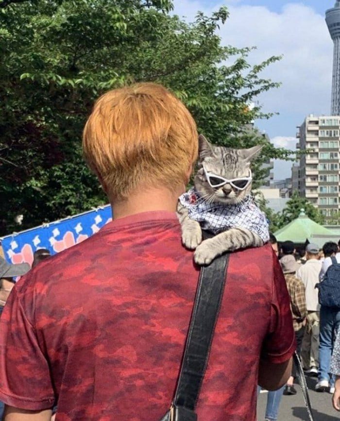 Cute And Funny Cats Of The Year 2019 (98 Photos)-92