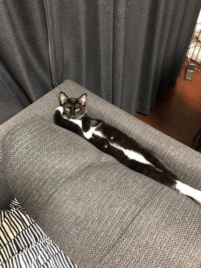 Cute And Funny Cats Of The Year 2019 (98 Photos)-97