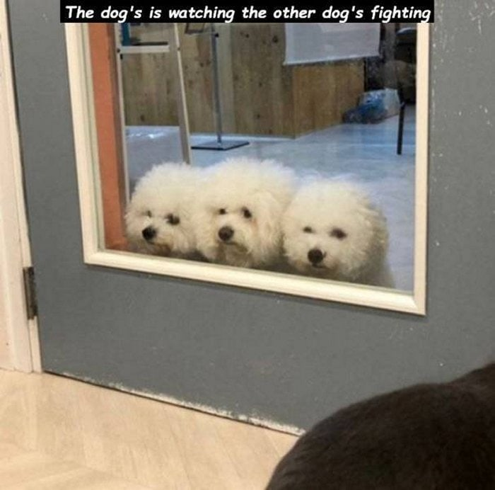 Funny Animal Pictures Of The Day Release 14 (63 Photos)-06