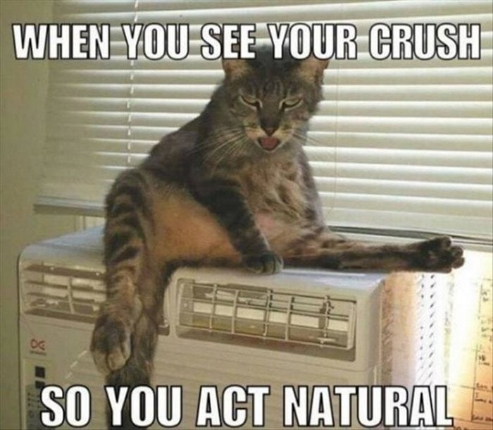 Funny Animal Pictures Of The Day Release 14 (63 Photos)-32