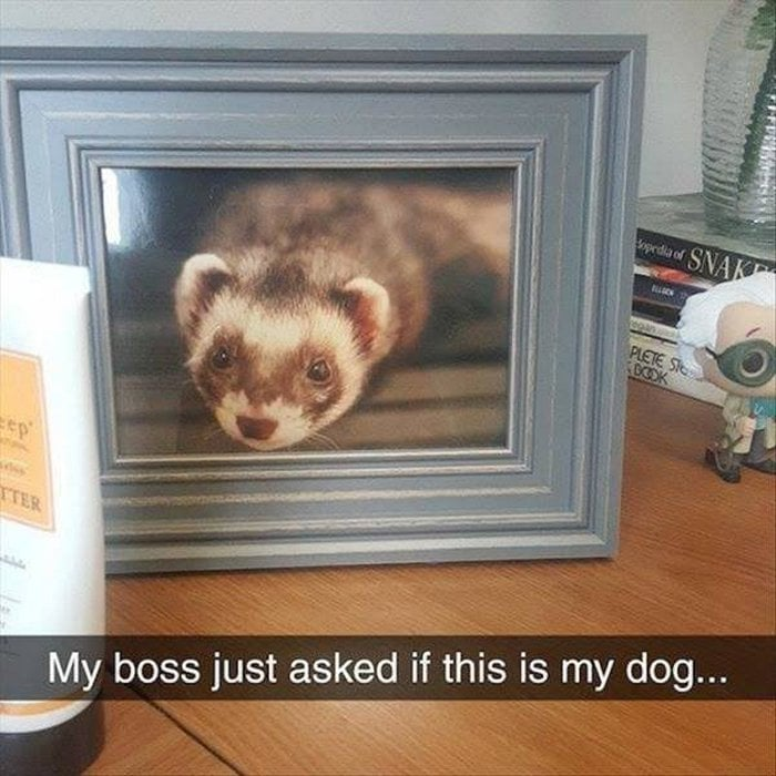 Funny Animal Pictures Of The Day Release 14 (63 Photos)-38