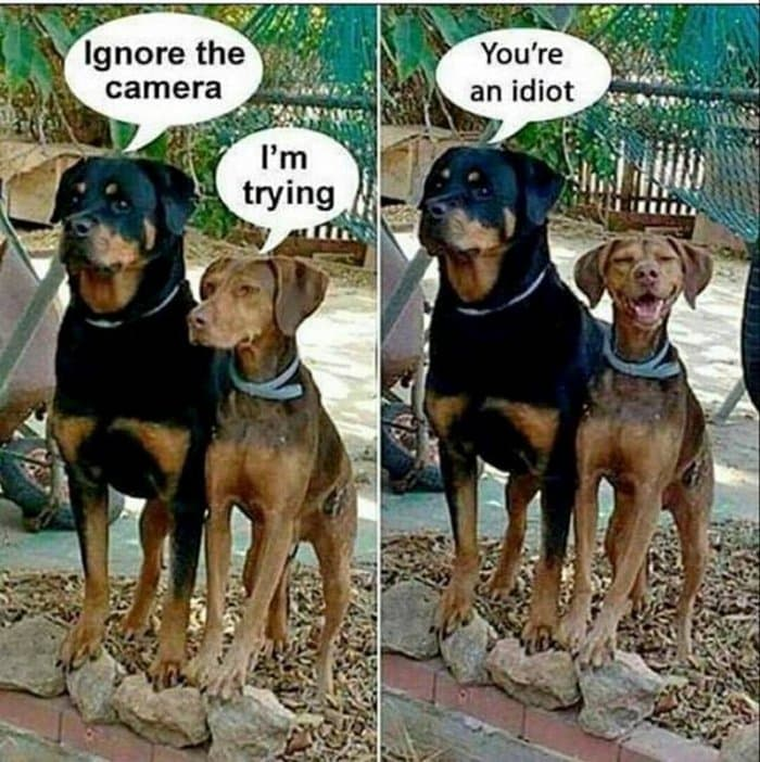 Funny Animal Pictures Of The Day Release 14 (63 Photos)-57
